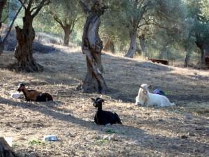 2014-08-30-07.29.11 ROLAND visite de Lesbos