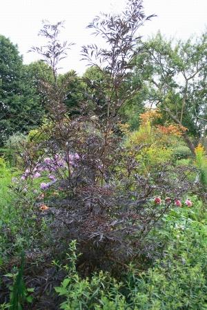 Les jardins du clos joli à Brécy - Aisne