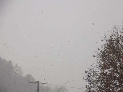 Grêles et neige fondante