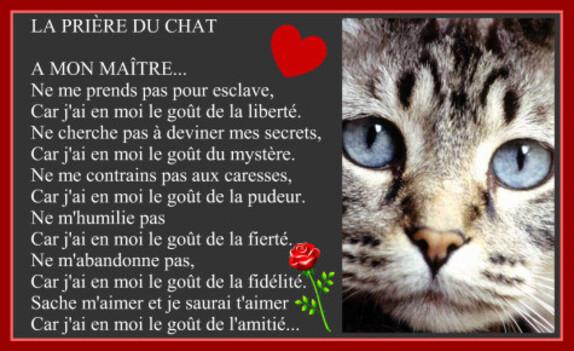 Journée chats 4