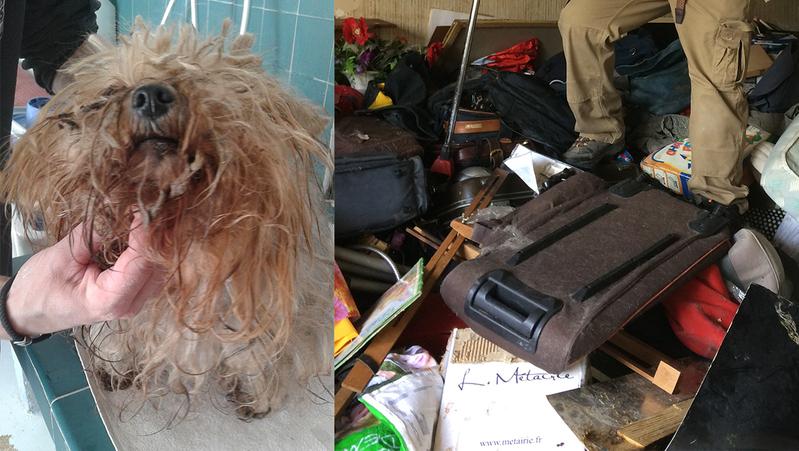 20 chats et un chien York retirés à un accumulateur compulsif