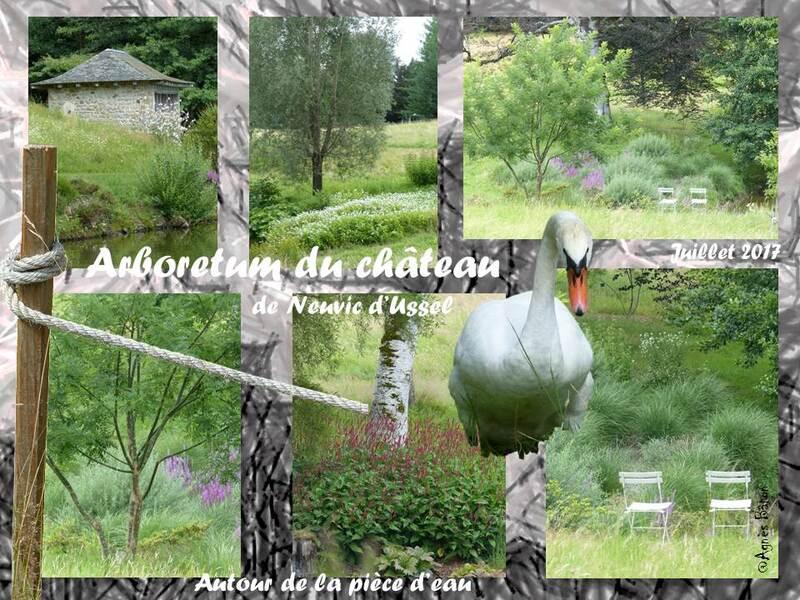 Arboretum du château de Neuvic