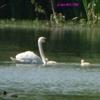 rencontre au Lac de Salabert