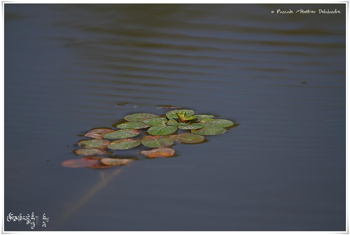 Sur les étangs..
