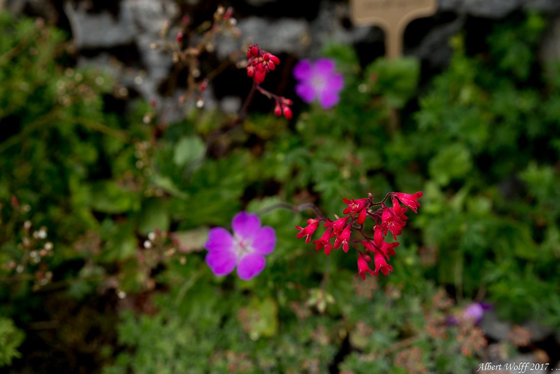 Les petites fleurs de l'Eolienne  - 2