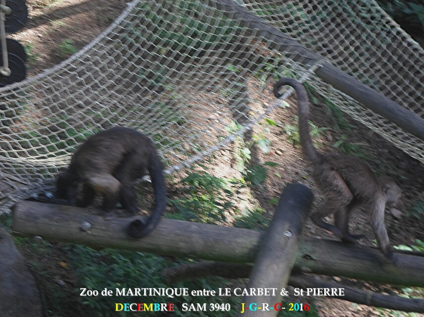 ZOO de MARTINIQUE 1/5 - 11/15  LE CARBET  972      D  11/01/2018