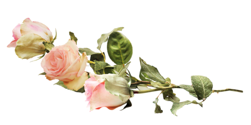 tube fleurs roses - (page 2) - .