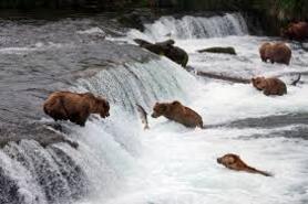 Grizzly : Un film, un documentaire, une histoire de vie.