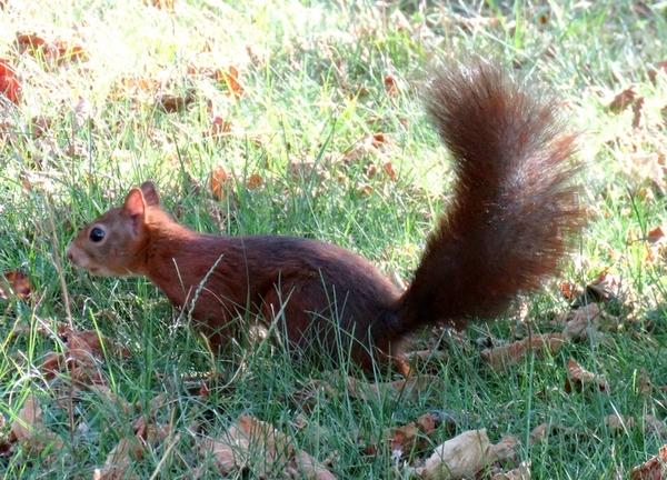 Mon ami l'écureuil est bien dépité !