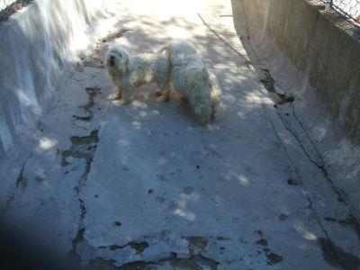 SOS élevage, association les ptits loups