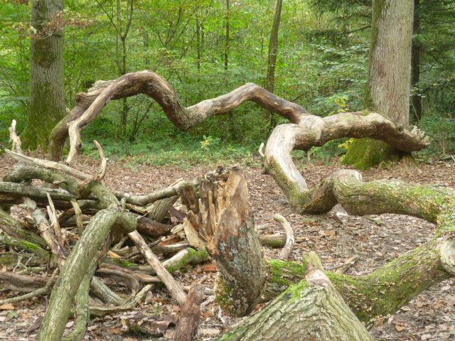 une branche tombée du ciel.