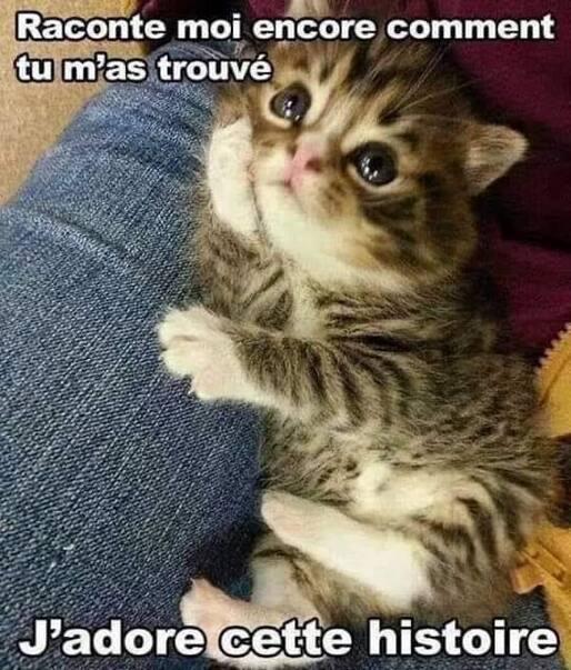 L'image contient peut-être: chat, texte qui dit 'Raconte moi encore comment tu m'as trouvé J'adore cette histoire'