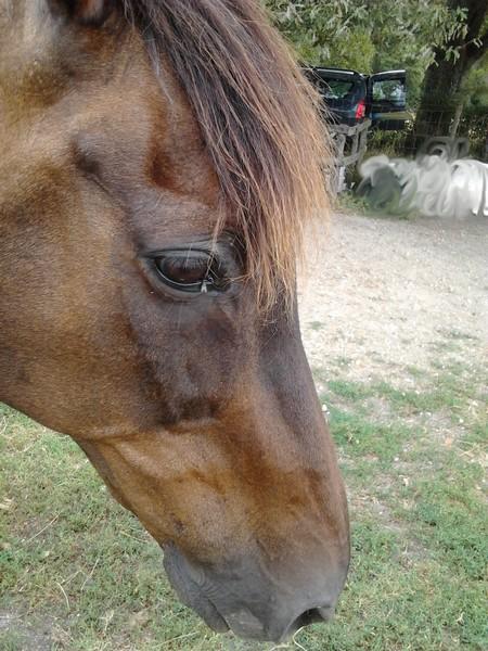 Cheval mon Ami                       22