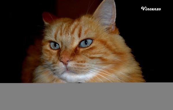 chat automne 1jpg