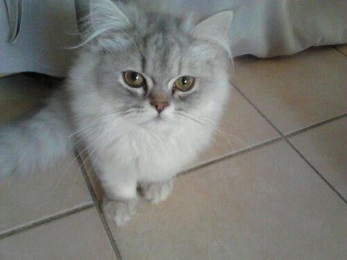 Un chaton vient de nous quitter....