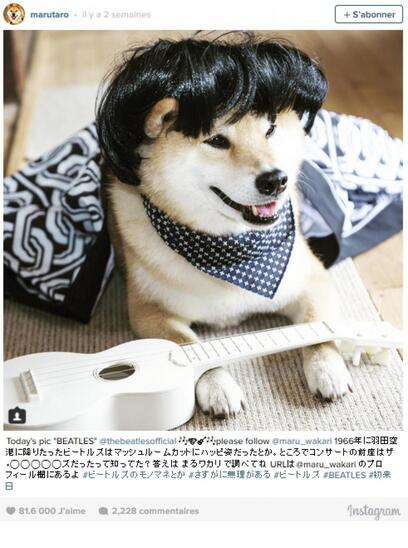 Marutaro, chien superstar