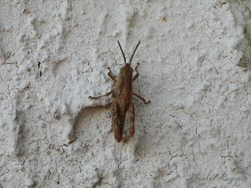 Sur le mur