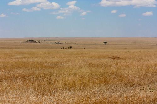 Grandes plaines du Serengeti, territoire du guépard