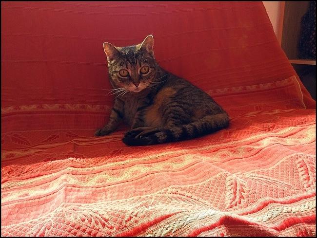 Rhumatyl - pour lutter contre les manifestations de l'appareil locomoteur du chat et du chien