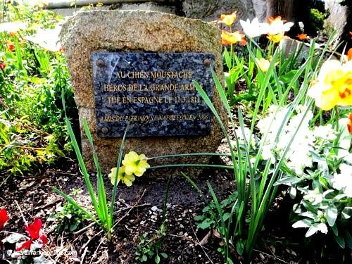 Cimetiere-des-Chiens-Moustache-memorial-stele
