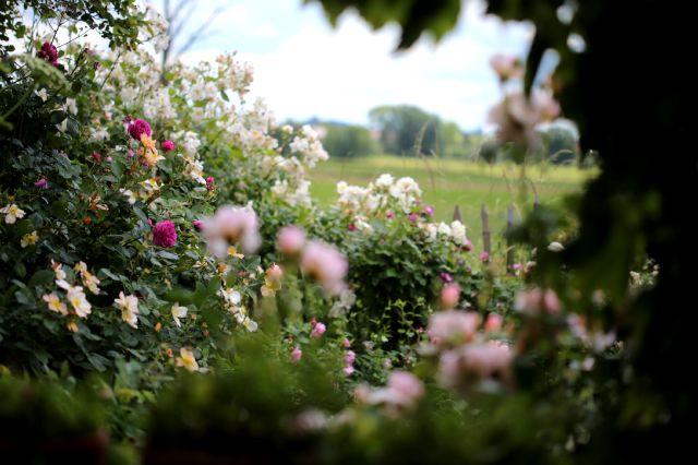 Le jardin comme exutoire (14)