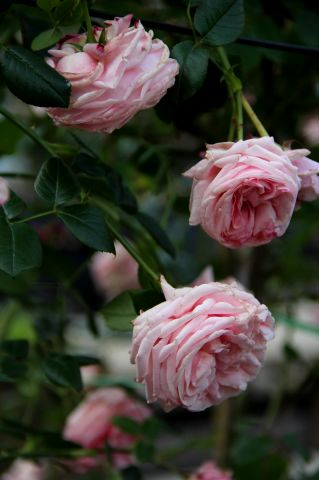 Floralies gantoises 2016