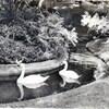 rennes jardin des plantes