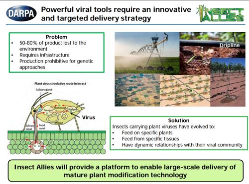 Des scientifiques sonnent l'alarme concernant le programme « insectes alliés » de la DARPA qui pourrait être utilisé comme arme biologique