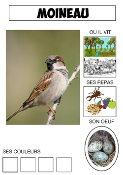 Le cahier des oiseaux (1)