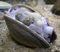 Les poulpes, des bêtes très spéciales.