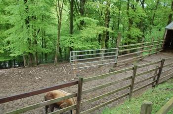 Parc animalier Bouillon 2013 enclos 151