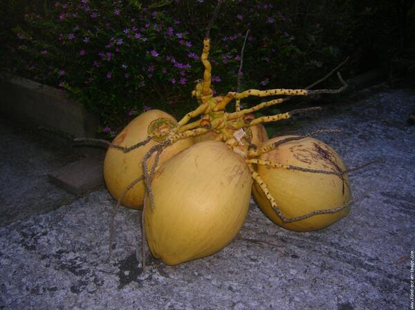 """Beauté de la nature """"Le cocotier"""""""