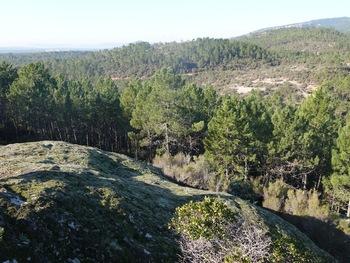 Le bord de la barre rocheuse. Au fond, les falaises qui dominent les gorges du Blavet