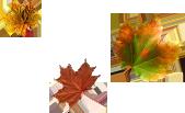 *** Mon automne***