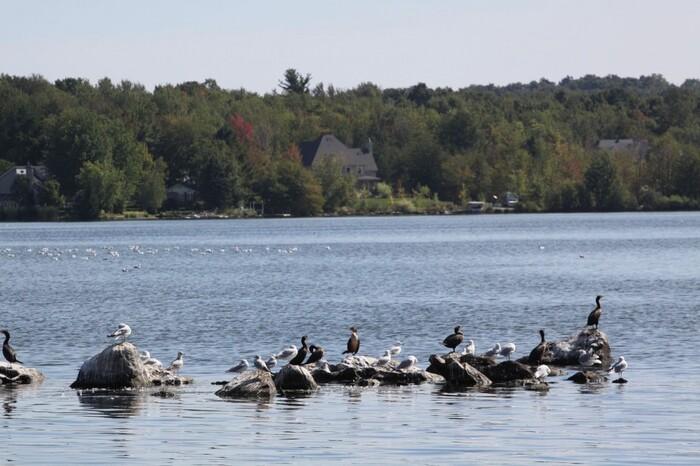 La Légende Du Petit Lac De Roxton Pound