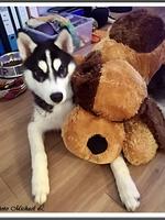 Stark (6 mois)