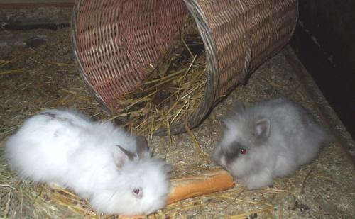 Mes lapinettes