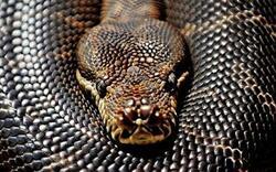Israël : un bébé de 13 mois mâchouille et tue un serpent !