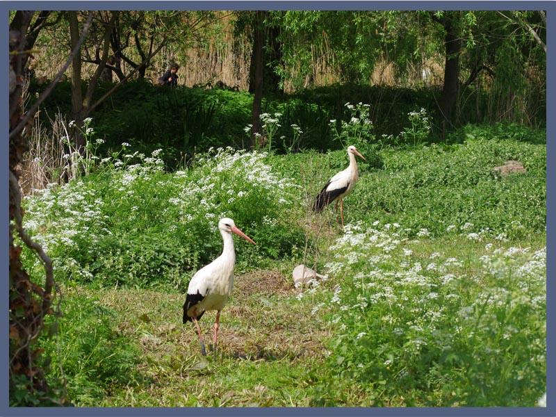 Parc des Cigognes 68150 Hanuwihr