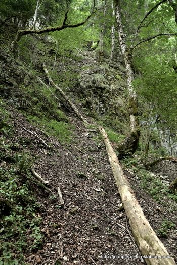 2015.07.19 Bain de fraîcheurs dans le Vercors (2)