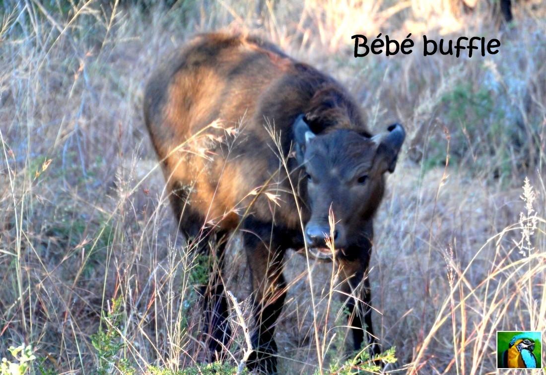 Afrique du Sud : juin 2018: Allez, nous repartons, un autre safari? 1/2