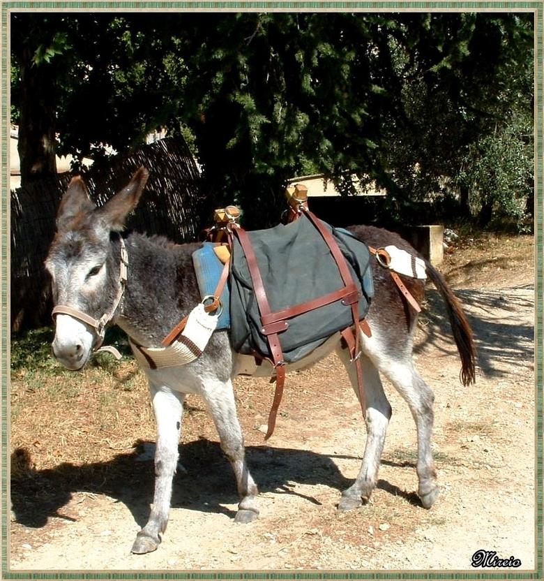 Le petit âne gris de St Nicolas