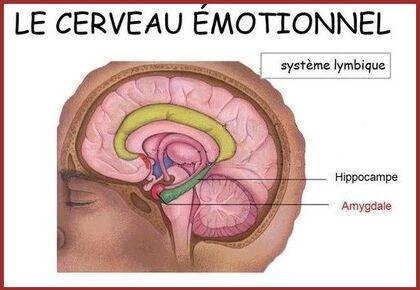 Emotions  2.