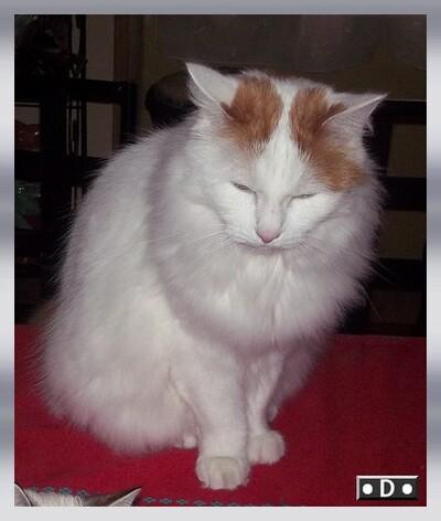 Le chat'niversaire des Triplés ...