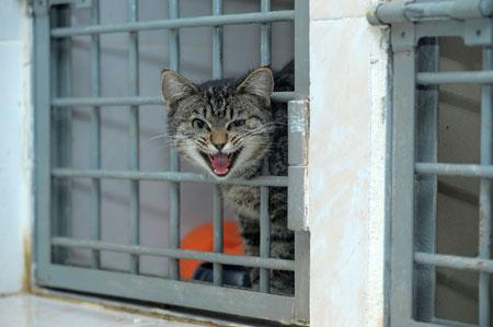 Rappelons les obligations des maires concernant les chats errants