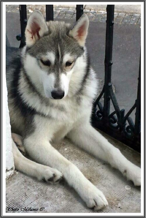 Keyko (5 mois)