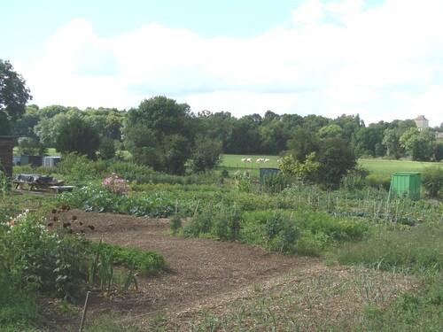 L'été aux Jardins Familiaux...