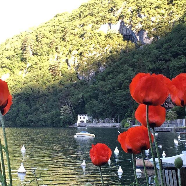 Bonjour....   Annecy en fleurs