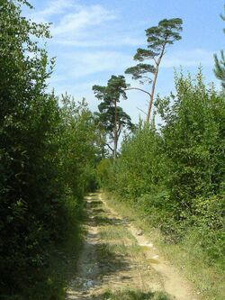 Entre Bois,Eure et Liègue