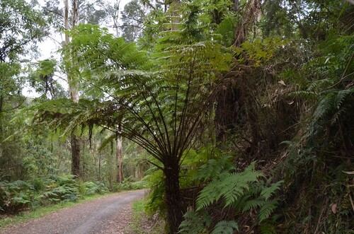 Des Dandenong ranges à Warrnambool
